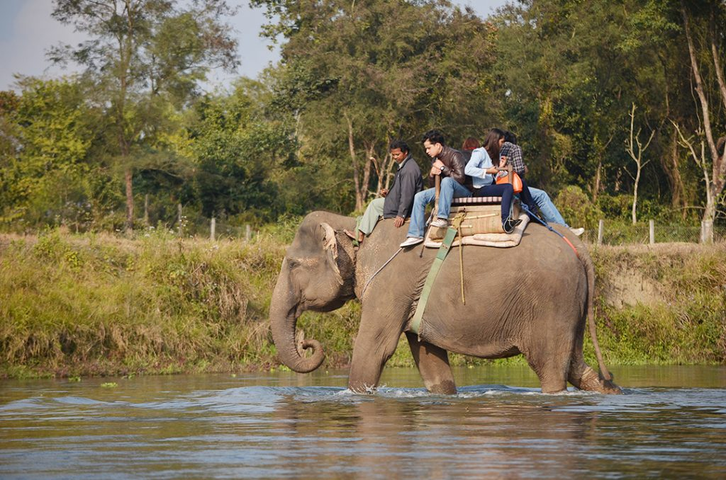 chitwan-elephant-riding-wish-nepal
