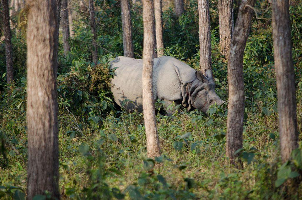 chitwan-one-horned-rhino-wish-nepal